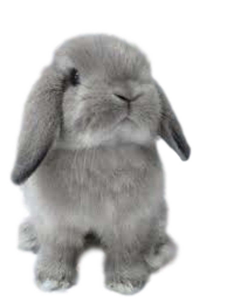Rabbit Breeder, Show and Small Pet Supplies, Bunny Rabbit