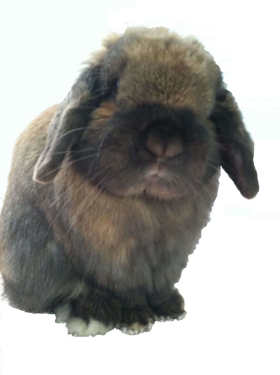 All things bunnies rabbit and small animal supplies and for Rabbit tattoo kit